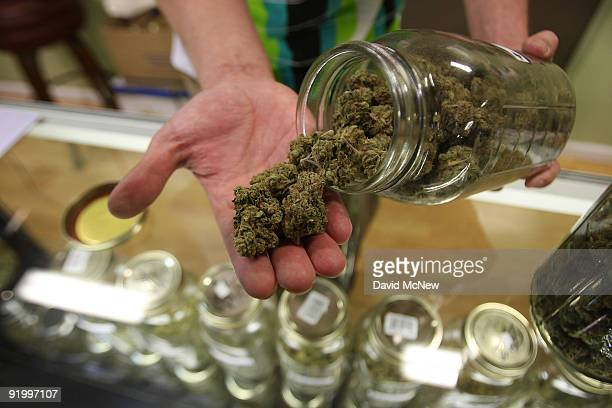 Dave Warden a bud tender at Private Organic Therapy a nonprofit cooperative medical marijuana dispensary displays various types of marijuana...