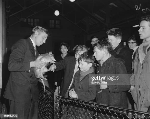 David Attenborough, presenter of the BBC's 'Zoo Quest' nature documentaries, showing an armadillo to a group of children at a Christmas lecture he is...