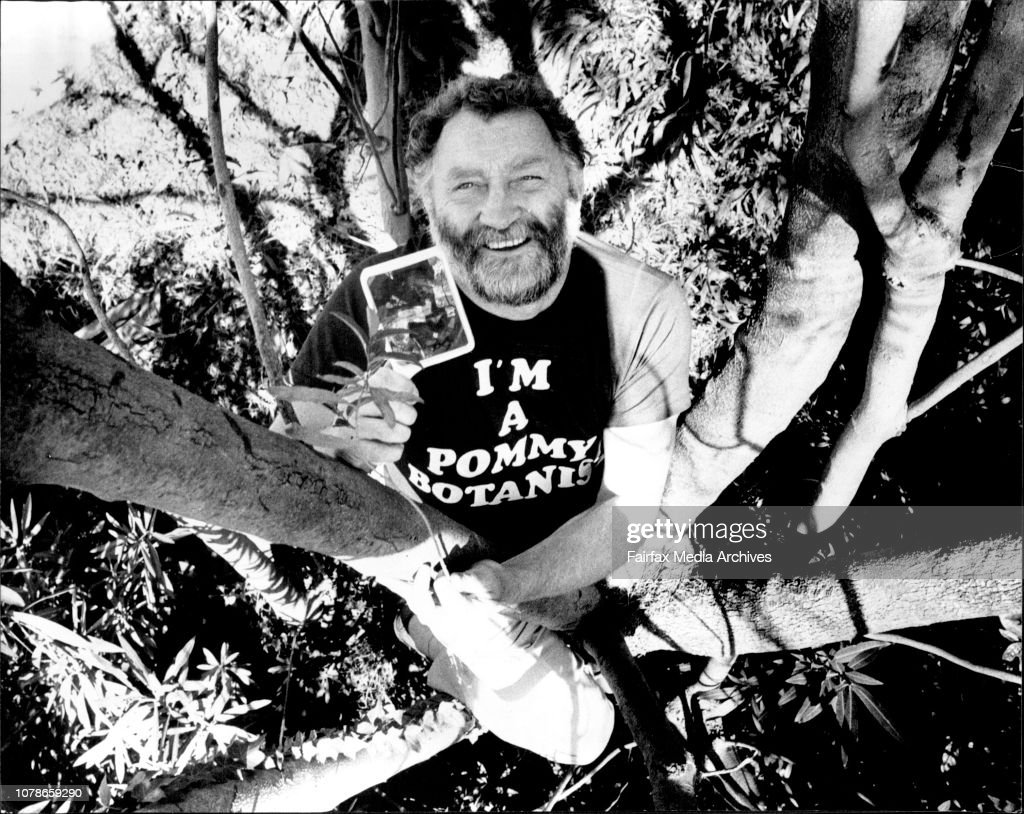 David Bellamy, investigates foliage, up an Acacia tree in Surry Hills.Visiting British botanist David Bellamy, here in Australian to promote his television series, Up A Gum Tree. : Nyhetsfoto