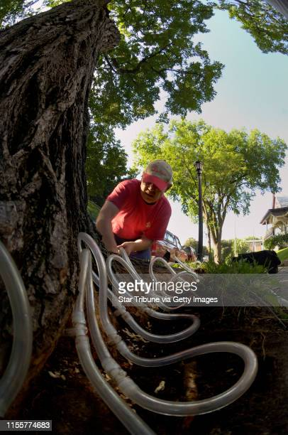 David Brewster/StarTribune Thursday_07/07/05_Mpls Craig Thiedich an arborist from Top Notch Tree service installs the tubing in the roots that will...
