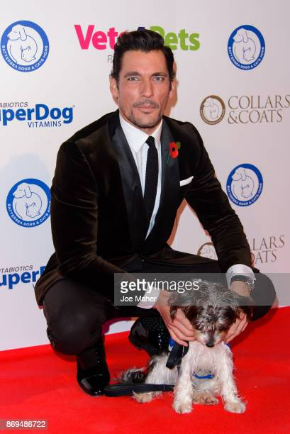 David Gandy attends the Collars and Coats Ball 2017 at Battersea Evolution on November 2 2017 in London England