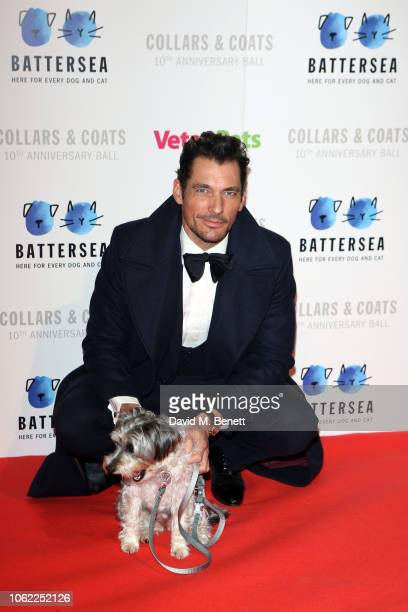 David Gandy poses with a dog at the Battersea Dogs & Cats Home Collars & Coats Gala Ball 2018 at Battersea Evolution on November 01, 2018 in London,...