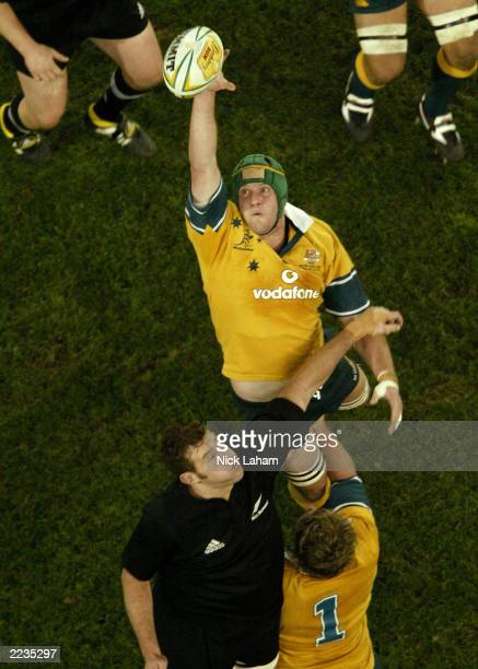 David Giffin of the Wallabies wins a lineout during the Tri Nations Bledisloe Cup match between the Australian Wallabies and the New Zealand All...
