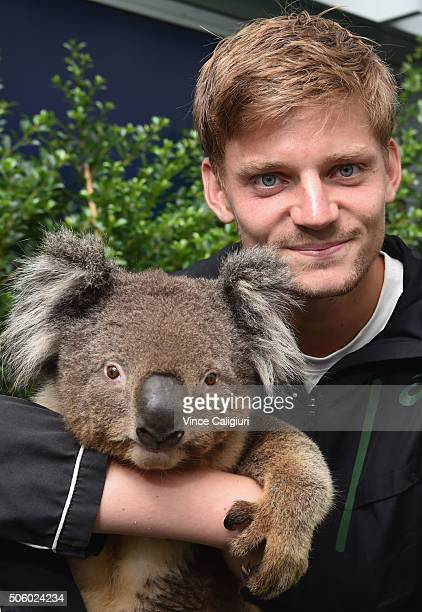 David Goffin of Belgium poses with a Koala at the player cafe garden during day four of the 2016 Australian Open at Melbourne Park on January 21 2016...