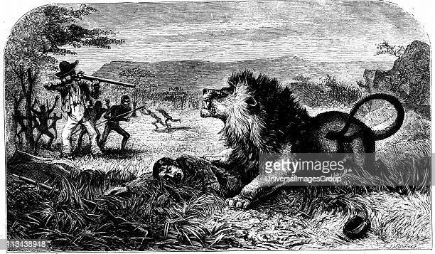 David Livingstone saved from a lion by Mebalwe a native school master From Missionary Travels and Researches in South Africa David Livingstone...