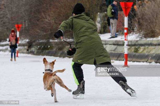 David plays catch with his dog as he ice-skates on the frozen Landwehr Canal in Berlin's Kreuzberg district on February 13, 2021 as hundreds of...