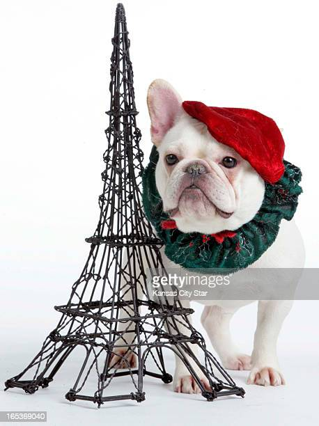 David Pulliam color photo illustration of a French bulldog wearing beret and wreath next to miniature Eiffel Tower for the third day of the 12 days...