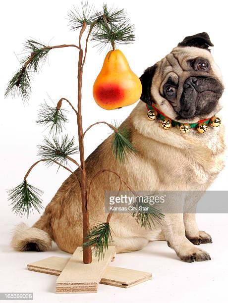 David Pulliam color photo illustration of a pug and a pear tree for the first day of the 12 days of Christmas a partridge in a pear tree