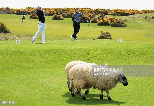David Rhys Jones of Vicars Cross tees off on the 18th hole as sheep graze yards away during round one of the RCW 2010 Welsh Open Young PGA...