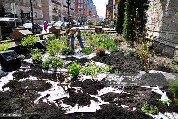 David Wiegman uses newspapers as a weed barrier in the soil before placing mulch on top at the garden of the Old South Church on Boylston Street in...