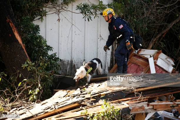 Davis Doty with Jester from Orange County Search and Rescue work to locate bodies along Olive Mill Road at Hot Springs Road in Montecito Wednesday...