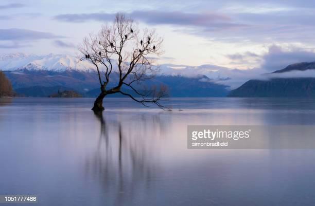 dawn e a árvore no lago wanaka na nova zelândia - lago wanaka - fotografias e filmes do acervo