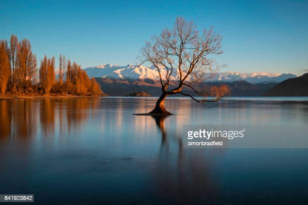 dawn and the tree at lake wanaka in new zealand - new zealand stock pictures, royalty-free photos & images