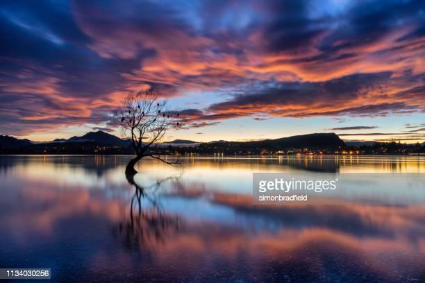 alvorecer e a árvore no lago wanaka, nova zelândia - lago wanaka - fotografias e filmes do acervo