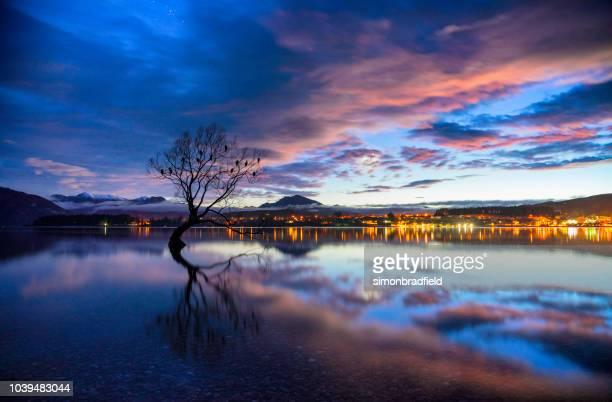 amanhecer se aproxima da árvore no lago wanaka, nova zelândia - lago wanaka - fotografias e filmes do acervo