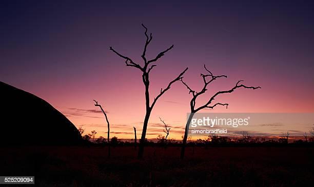 Dawn Approaches Uluru