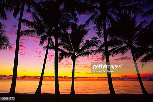 Dawn at beach with palm trees