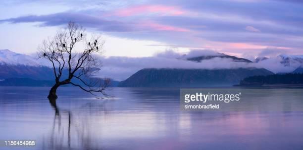 alvorecer na árvore famosa do lago wanaka, nova zelândia - lago wanaka - fotografias e filmes do acervo