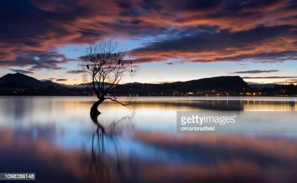 amanhecer na famosa árvore do lago wanaka - lago wanaka - fotografias e filmes do acervo