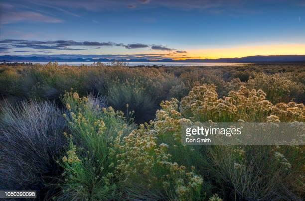 Dawn at South Mono Lake