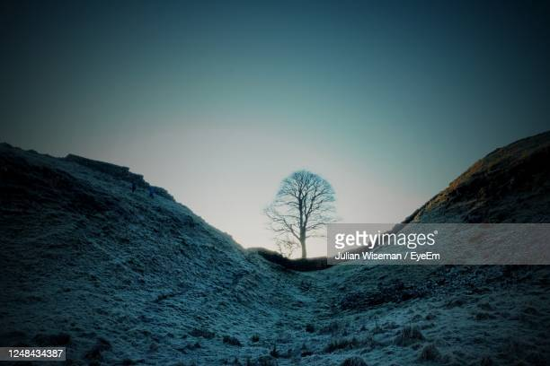 dawn at sycamore gap hadrian's wall - bare tree stock pictures, royalty-free photos & images