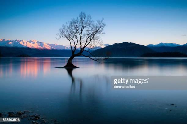 amanhecer na árvore no lago wanaka na nova zelândia - wanaka - fotografias e filmes do acervo