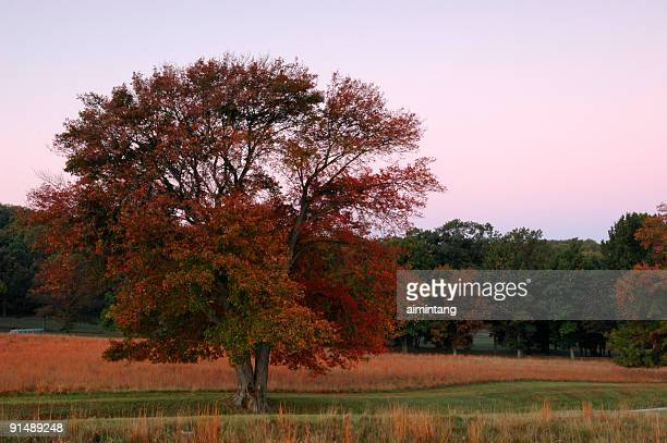 Dawn at Valley Forge in Autumn