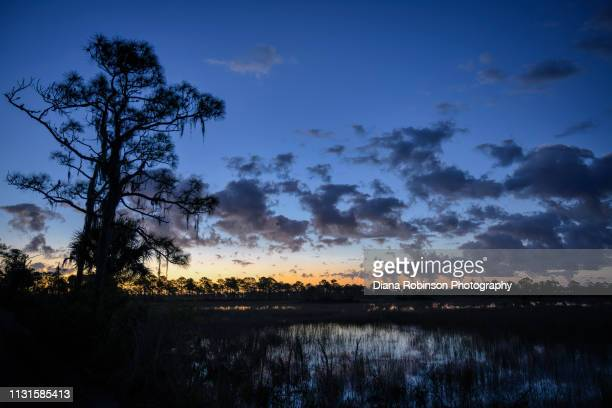 dawn breaking over marsh at babcock wildlife management area near punta gorda, florida - musgo español fotografías e imágenes de stock