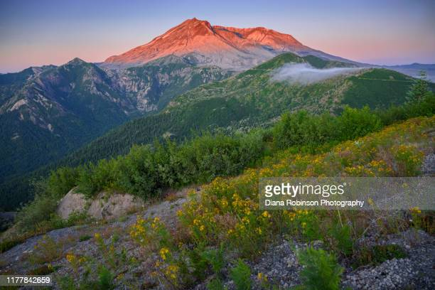 dawn breaking with early morning fog at mount st. helens at windy ridge viewpoint, washington state - mount st. helens ストックフォトと画像