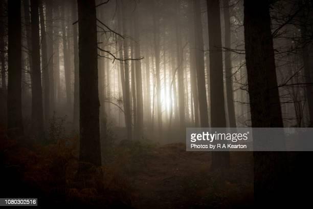 dawn in a dark winter forest - niebla fotografías e imágenes de stock
