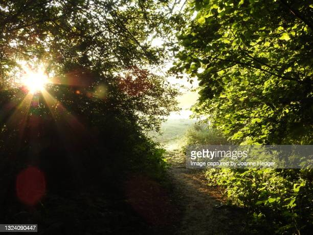 dawn in june walking the countryside of west sussex beating the dog walkers and joggers - national wildlife reserve stock pictures, royalty-free photos & images