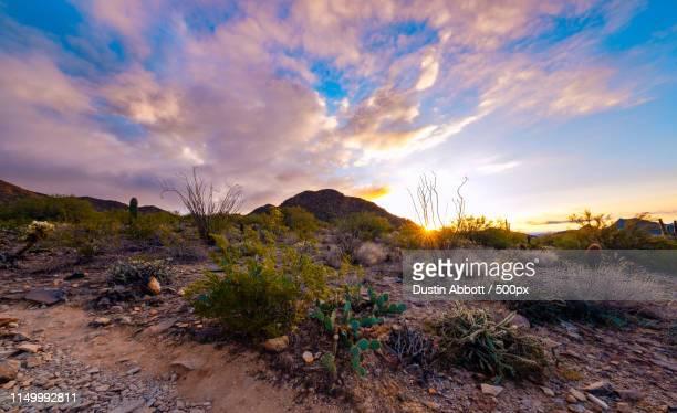 Dawn In The Desert
