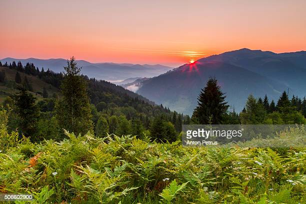 Dawn in the mountains with ferns