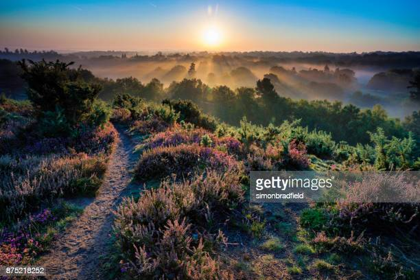 dawn in the surrey hills - surrey england stock pictures, royalty-free photos & images