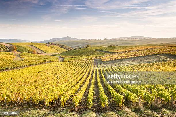 dawn in the vineyards of sancerre, france. - cultura francesa - fotografias e filmes do acervo