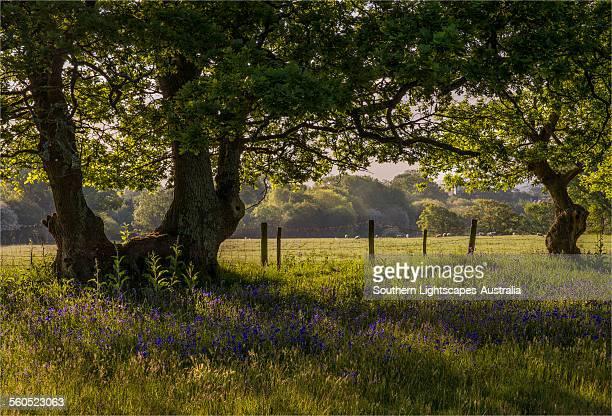 Dawn Light Stokeford