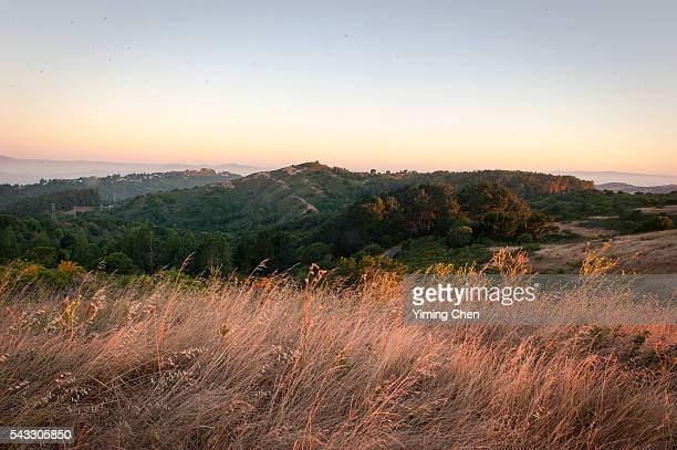 dawn of tilden regional park - east bay regional park stock pictures, royalty-free photos & images