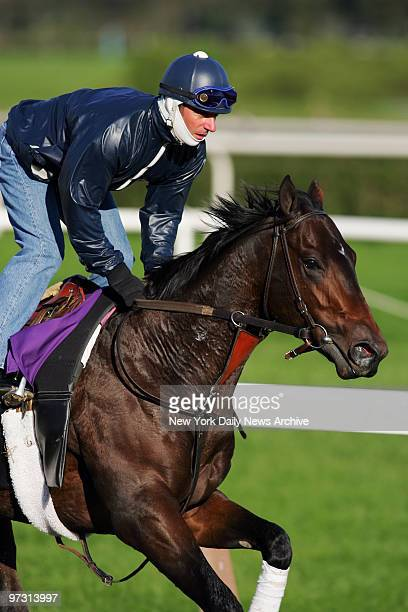 Dawn of War runs the track at Belmont Park in preparation for the 2005 Bessemer Trust Breeders' Cup Juvenile one of eight races in the 22nd Breeders'...