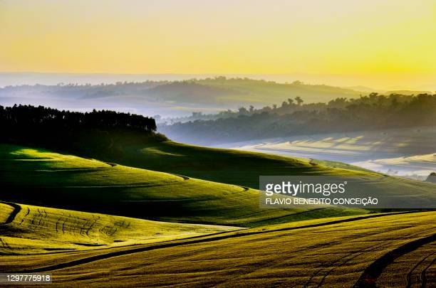 dawn on a farm in the paiquere district of londrina in brazil with the sunset over the clouds with the rays of the sun and the fog over the wheat plantation - parana state stock pictures, royalty-free photos & images