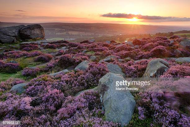Dawn on Ilkley Moor, West Yorkshire, England