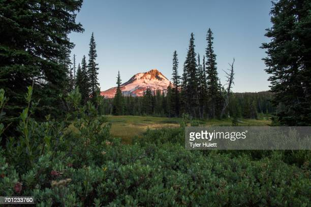 dawn on mt. hood from elk meadow in july - pacific crest trail stock pictures, royalty-free photos & images