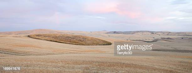 dawn on palouse wheat fields - terryfic3d stock pictures, royalty-free photos & images