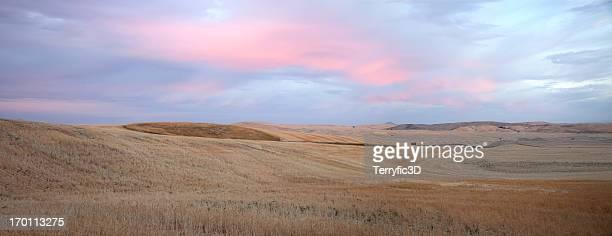 dawn on palouse wheat fields - terryfic3d bildbanksfoton och bilder