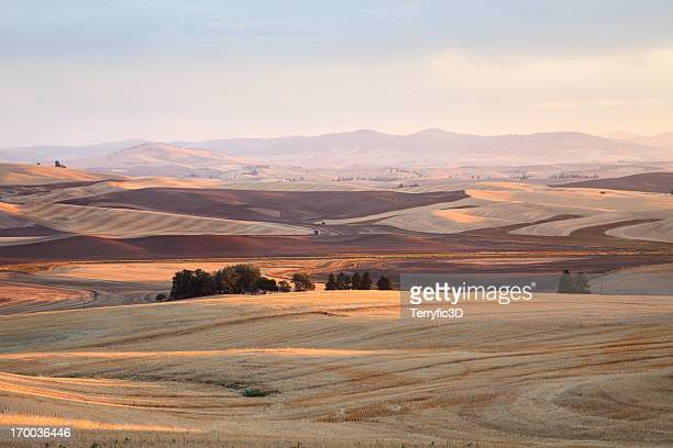 dawn on rolling wheat fields of palouse agricultural area - terryfic3d stock pictures, royalty-free photos & images