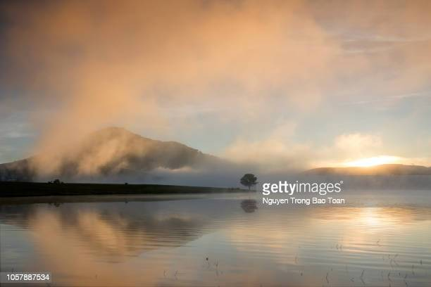 dawn on the lake with fog, mountain and lonely tree - 状態 ストックフォトと画像