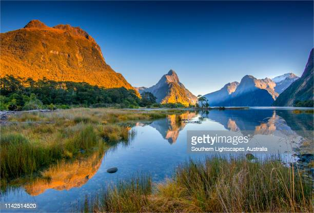 dawn on the water's edge of the deepwater basin, milford sound in the south island, new zealand. - new zealand bildbanksfoton och bilder