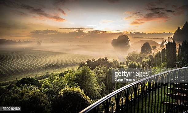 dawn over hawkes bay vines - winery stock pictures, royalty-free photos & images