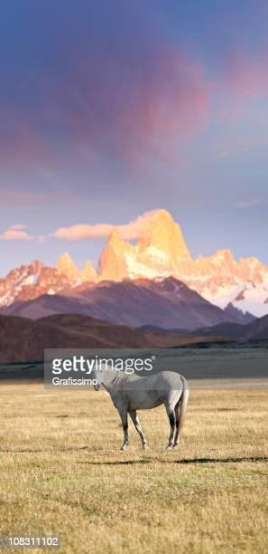 dawn über mount fitz roy in patagonien argentinien mit pferd - patagonische anden stock-fotos und bilder