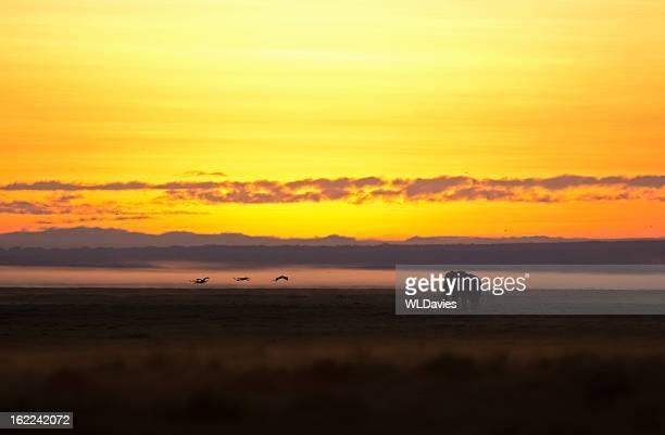 Dawn safari