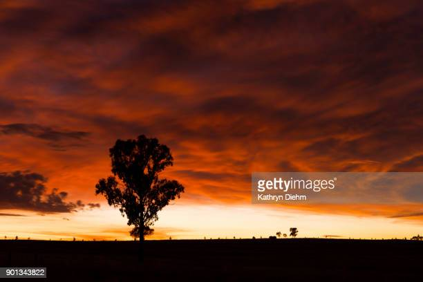 dawn sunrise in the outback - tamworth australia stock pictures, royalty-free photos & images